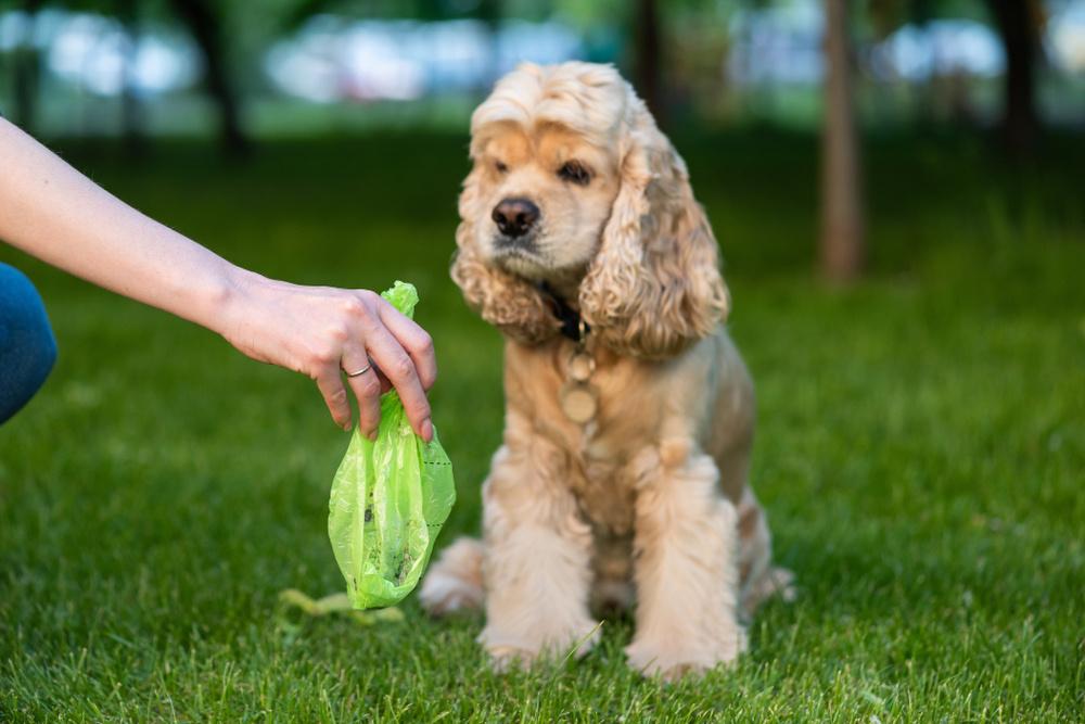 Šuns ekskrementai gatvėse – didesnis pavojus, nei manote?