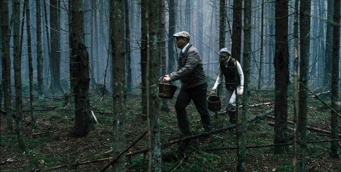 Apie grybus ir kaip nepasiklysti miške