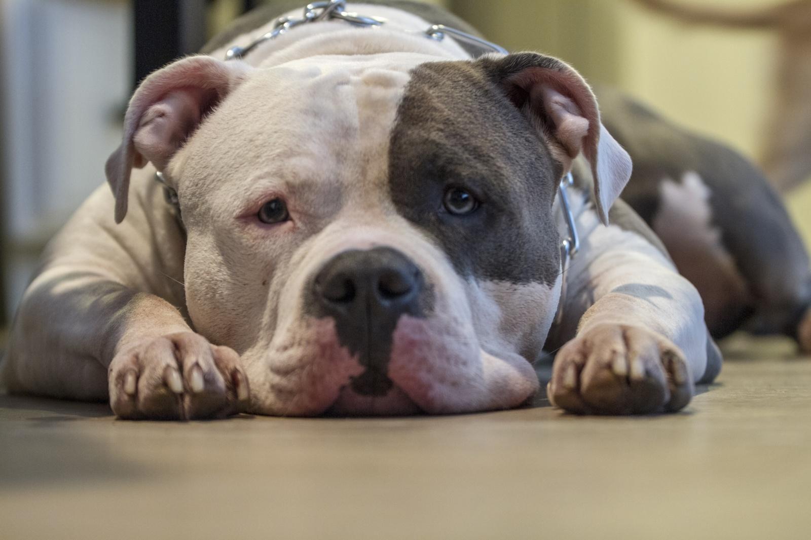 Nemokšiškumas gali sugadinti šuns psichiką