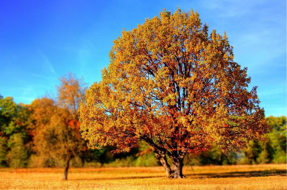 Orai: po niūraus trečiadienio – temperatūros šuolis