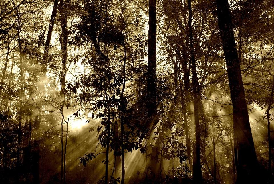 Daugiau kaip pusė Europos endeminių medžių rūšių gali išnykti
