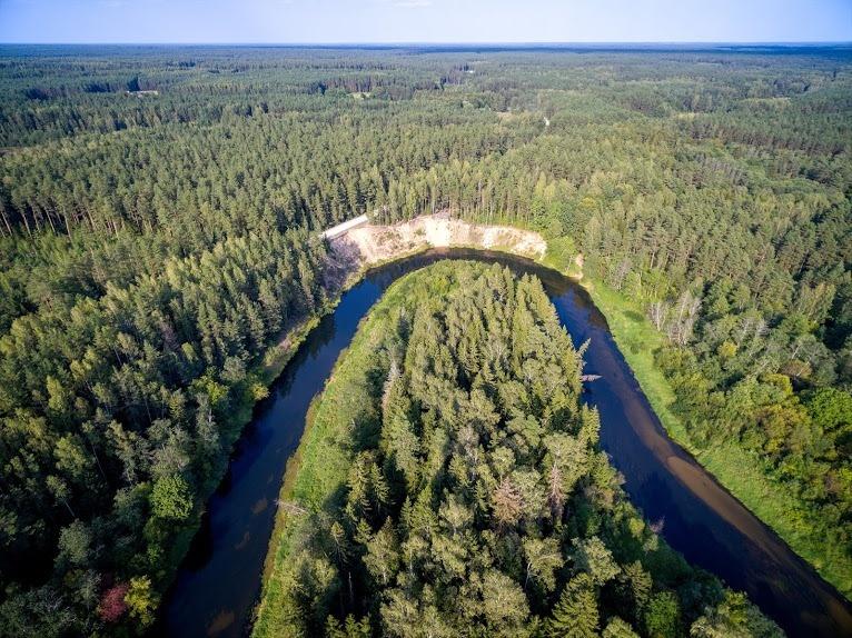 Kultūros veikėjai ir girios gyventojai ragina ginti Šimonių girią
