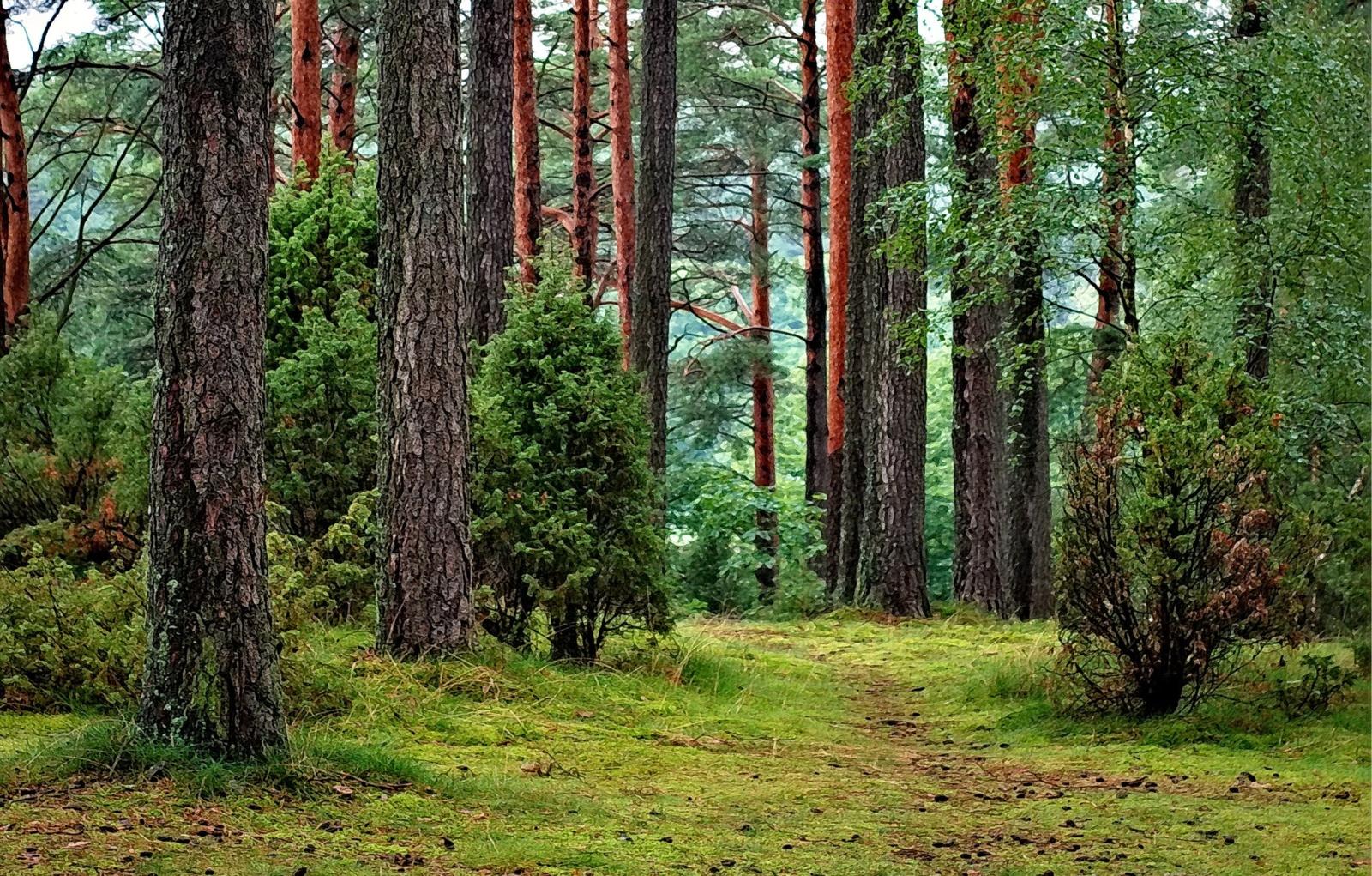 Spalio-gruodžio mėnesiais Palangos girininkijoje bus tvarkomi rekreacinės paskirties miškai
