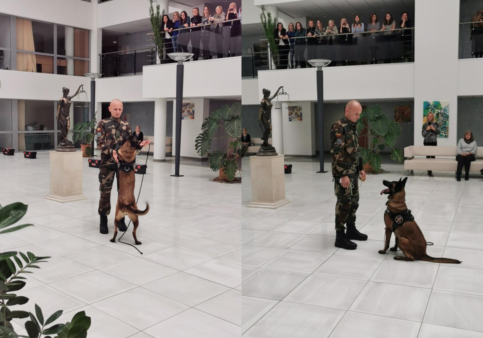 Pasieniečių šunys savo sugebėjimus demonstravo teisme