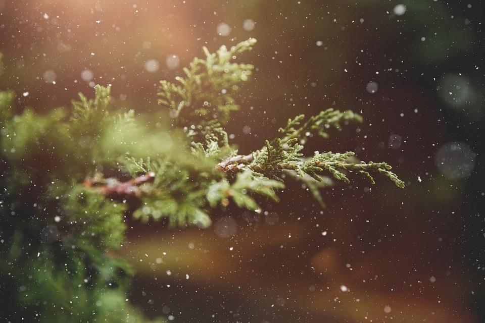 Panevėžys kalėdinio laikotarpio pradžią skelbs lapkričio 29-ąją