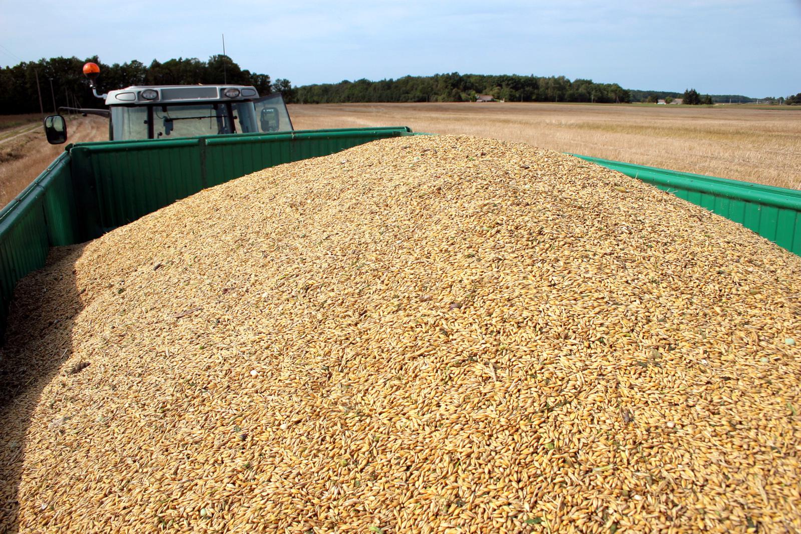 Spalio pradžioje didėjo daugelio grūdų supirkimo kainos