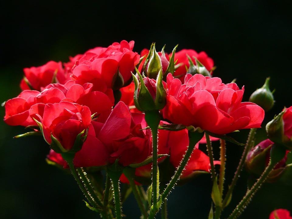 Kokie augalai tinka jums pagal Zodiako ženklą?
