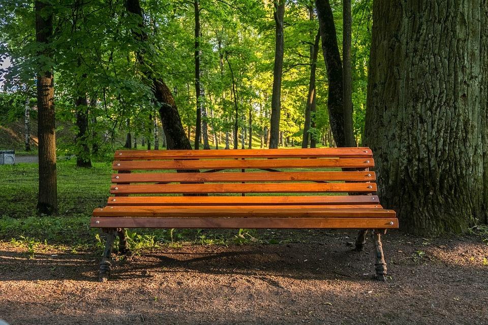 Kaip bus tvarkomi želdiniai Kęstučio aikštės, Draugystės skvero ir Pilies parko erdvėse?