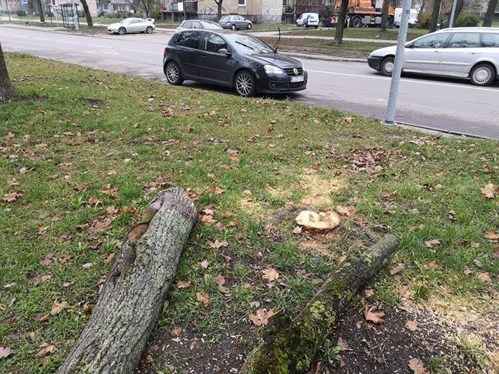 Dėl medžių kirtimų Žirmūnuose parlamentarė kreipėsi į Vilniaus valdžią