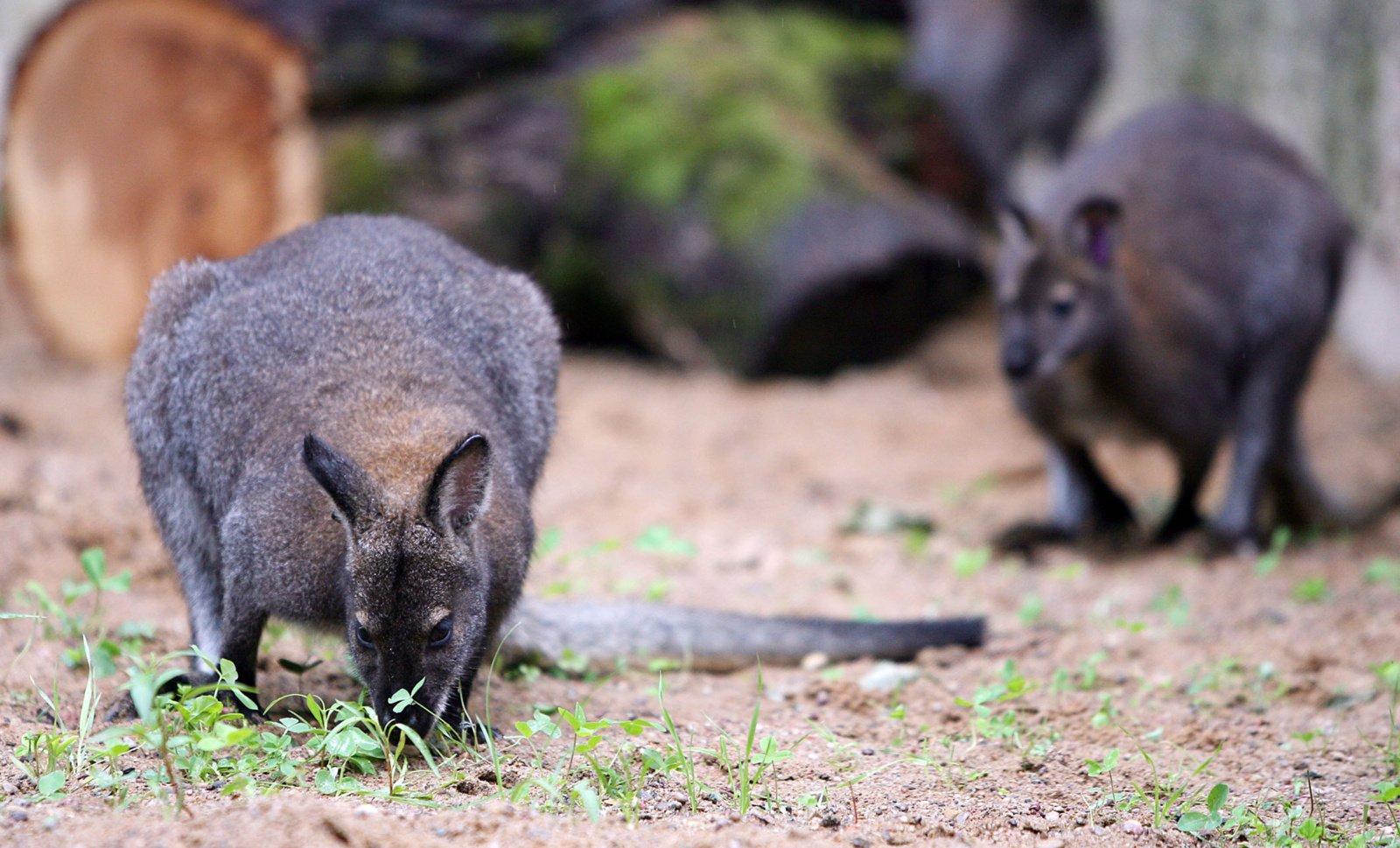 Seimas iš dalies uždraudė naudoti laukinius gyvūnus cirke