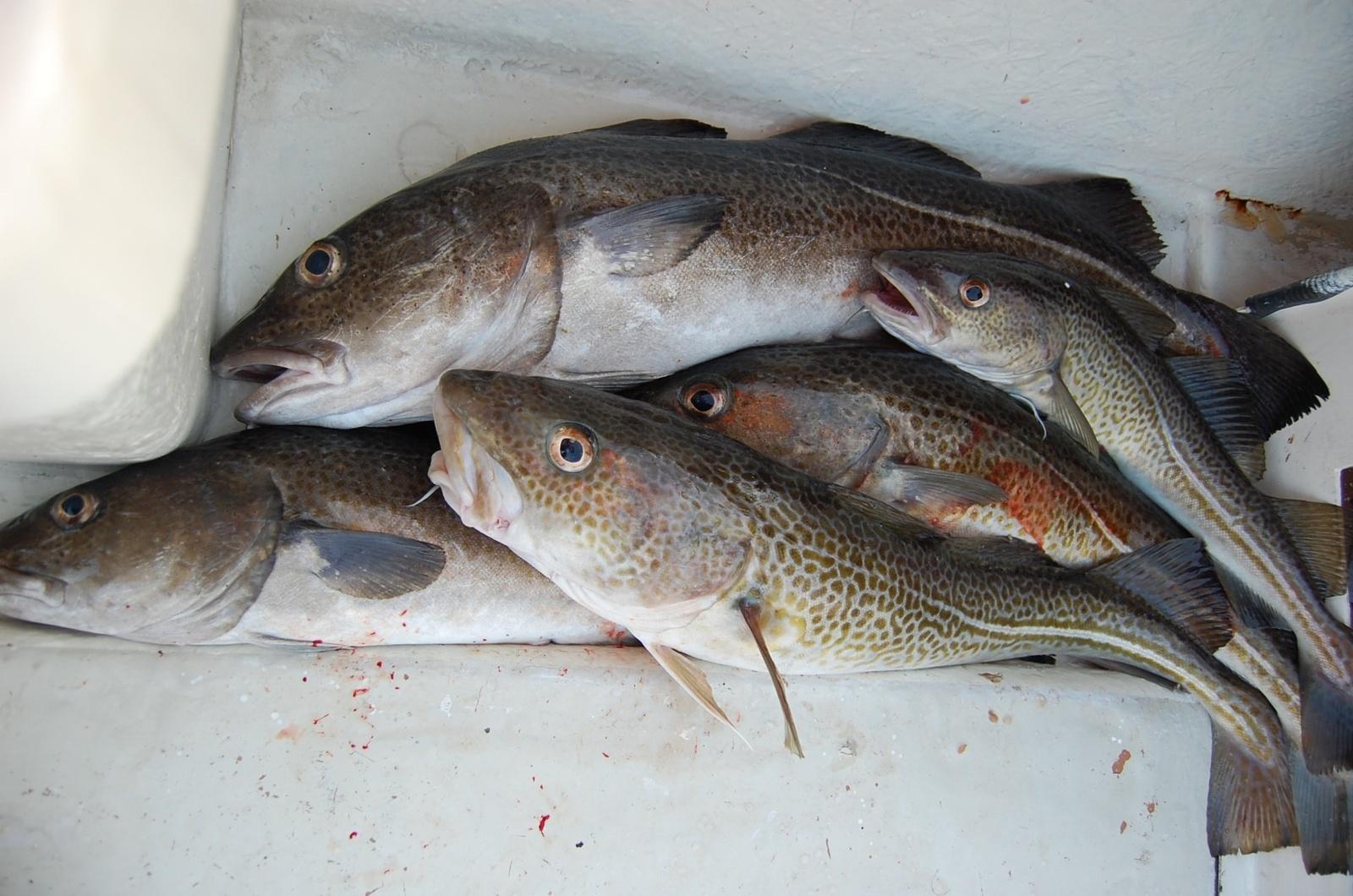 Nyksta žuvys: 5 eksperto patarimai, kaip atsakingai rinktis žuvį ir jos produktus