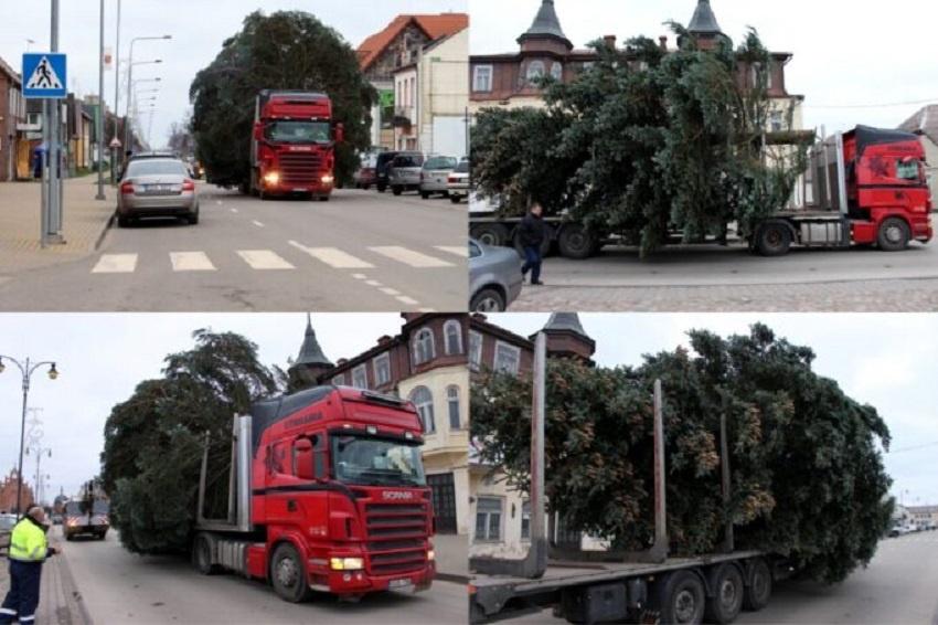 Prasideda kalėdinė puošyba: miesto erdvėse – tuzinas eglučių