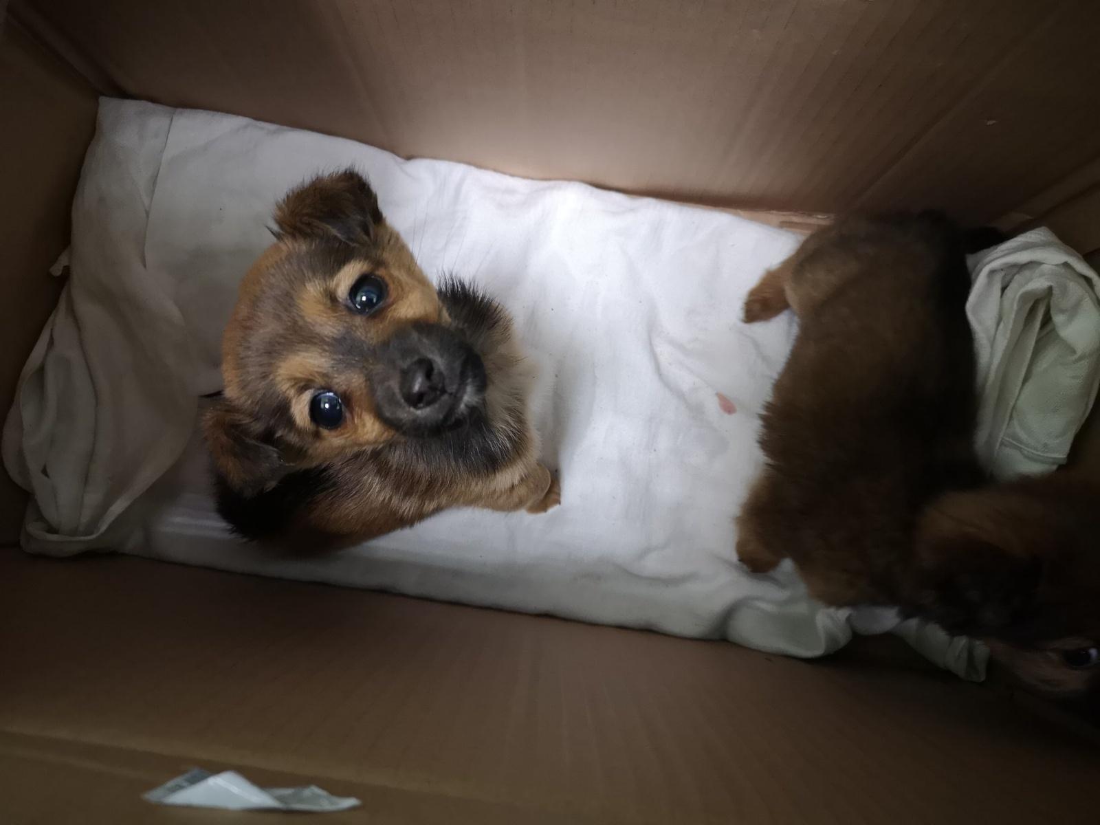 Pasieniečiai išgelbėjo du išmestus šunyčius