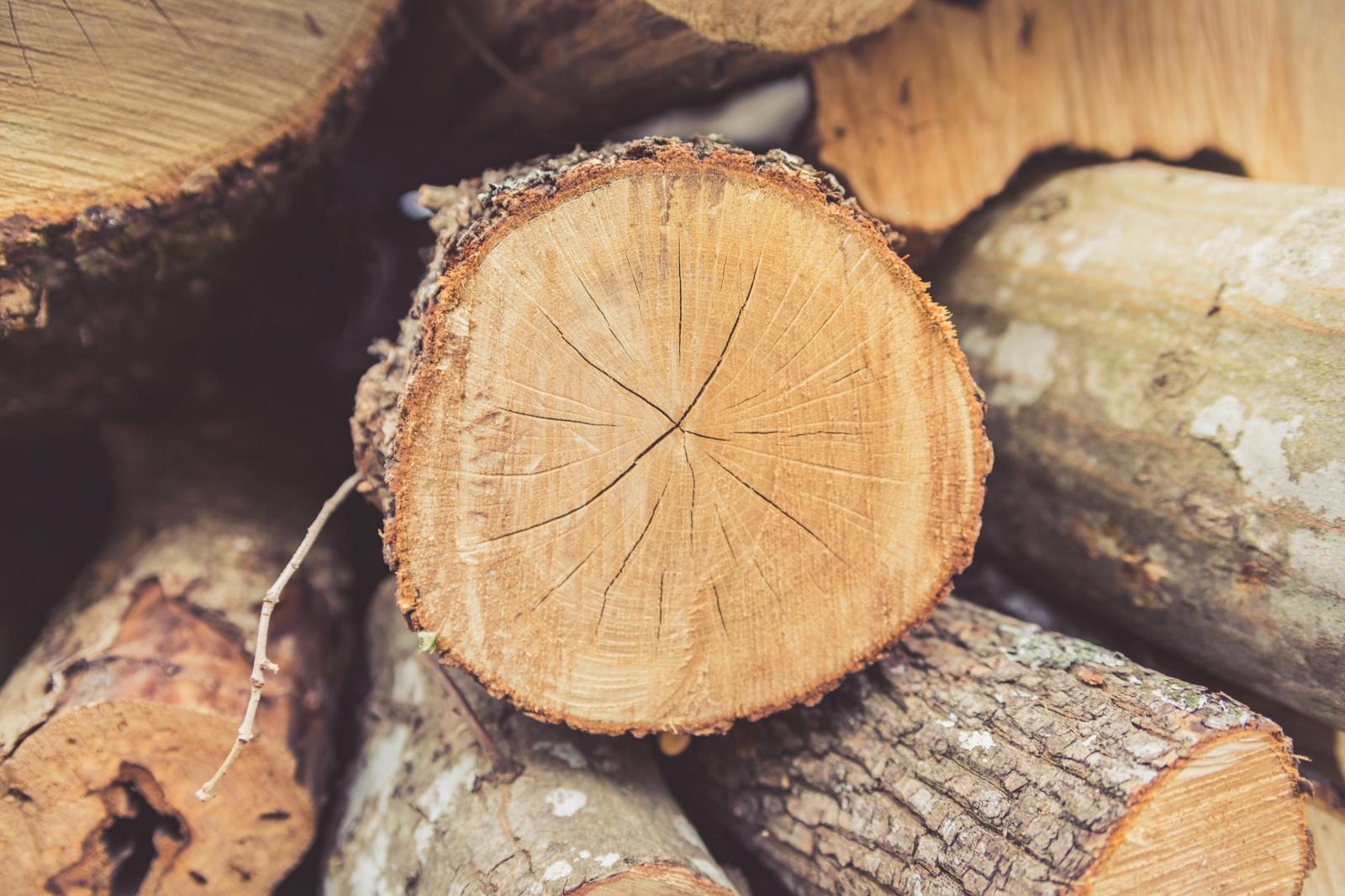 Šilutės rajone iškirstas miškas, pavogta mediena