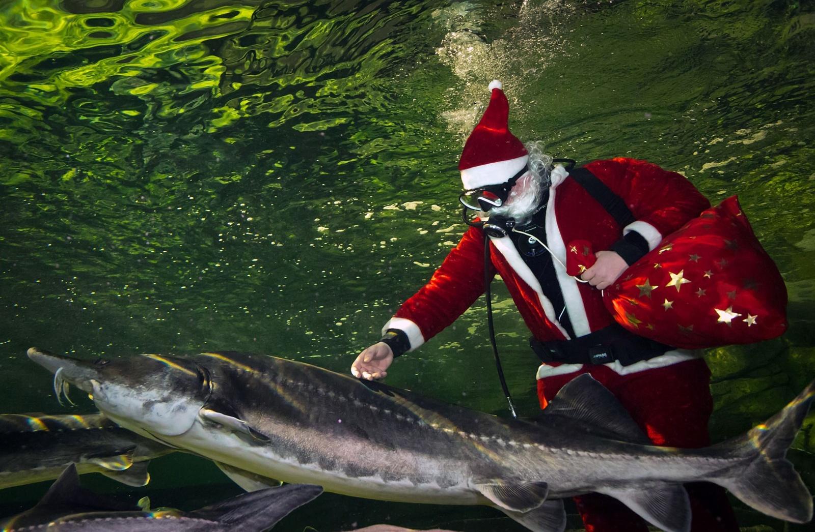Klaipėdoje akvariume nardo Kalėdų senelis ir veikia Kalėdų paštas