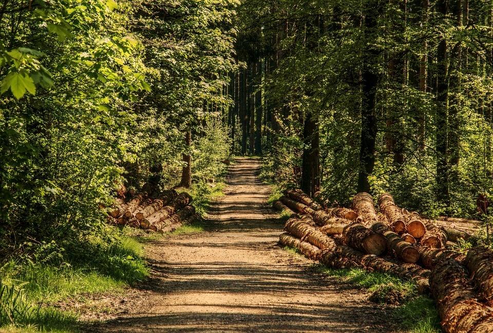 Vyriausybė atidėjo svarstymą dėl valstybinės reikšmės miškų ploto didinimo