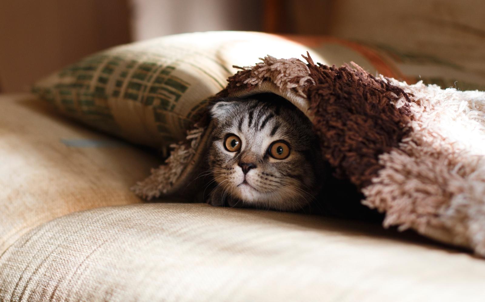 Kodėl katės mėgsta gulėti ir sėdėti ant įvairiausių daiktų?