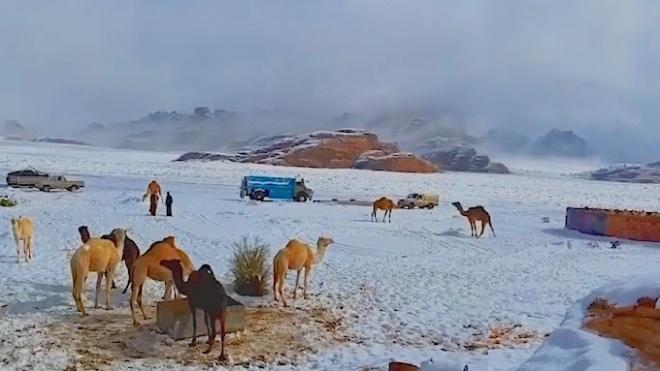 Pro Saudo Arabiją prasiautus audrai dykumą užklojo sniegas (vaizdo įrašas)