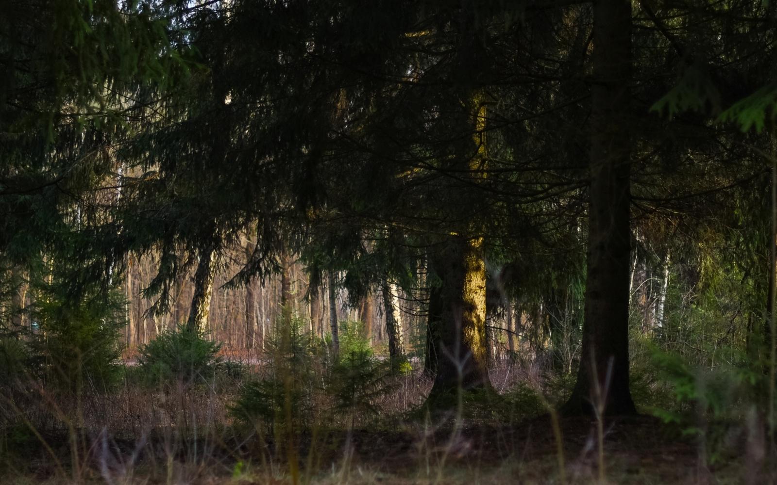 Miške Jurbarko rajone rastas moters kūnas