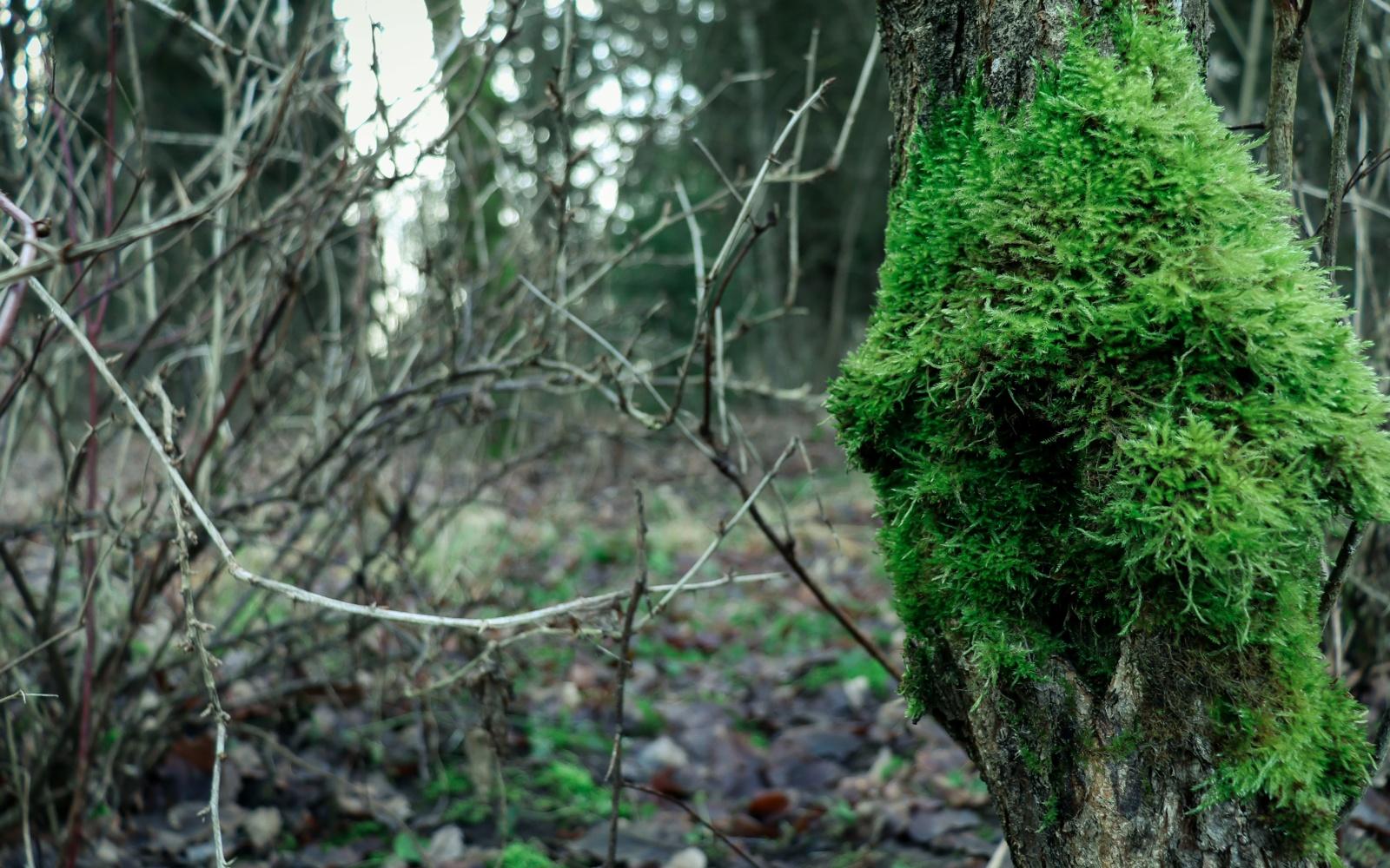 Miškininkai pradeda svarbiausius rudens darbus