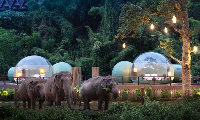 Už 585 dolerius nakčiai –  poilsis burbule dramblių apsuptyje