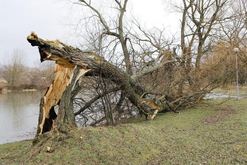 Ugniagesiai gelbėtojai 80 kartų vyko šalinti vėjo nuverstų medžių ir nutrauktų laidų