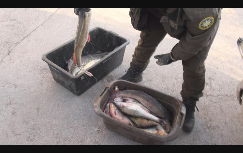Kėdainių rajone – draudžiamu laiku sugautos lydekos ir žvejyba statomaisiais tinklais