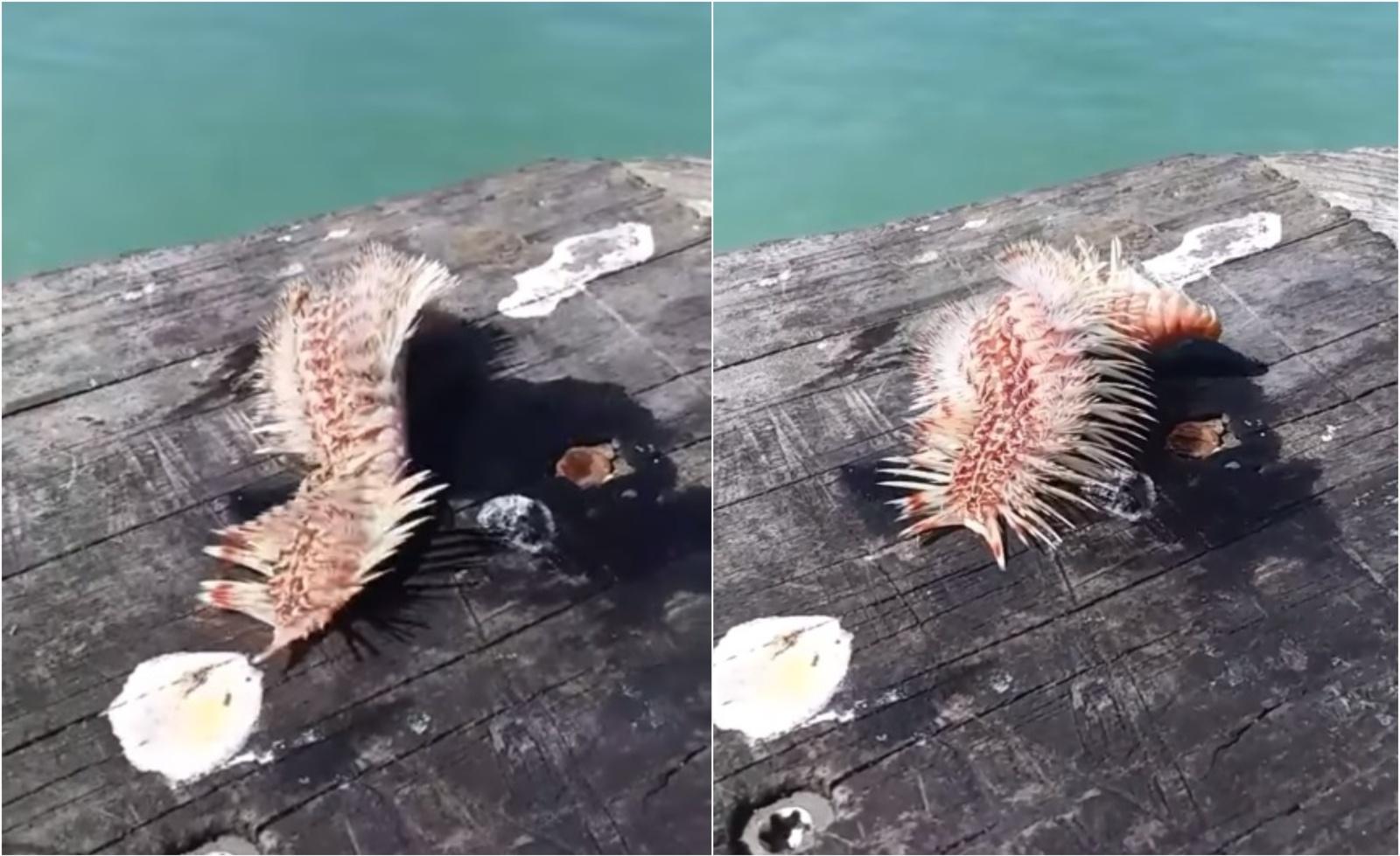 Uoste žvejojusi moteris ištraukė paslaptingą padarą: kas tai? (vaizdo įrašas)