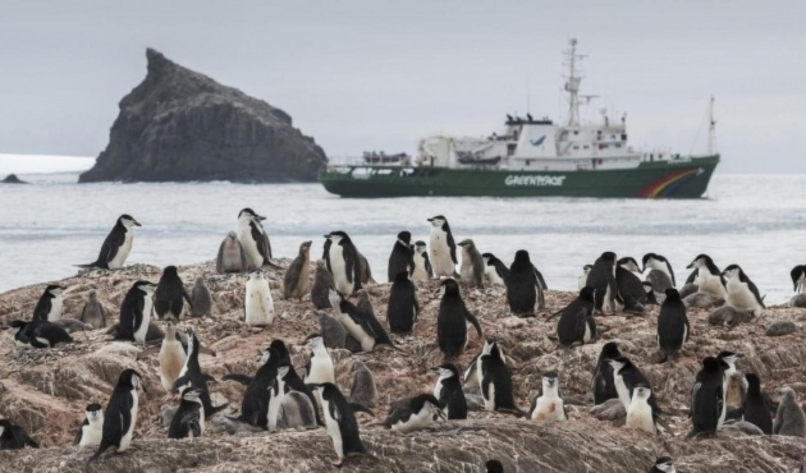 Klimato krizė stumia pingvinus išnykimo link? Paukščių drastiškai mažėja