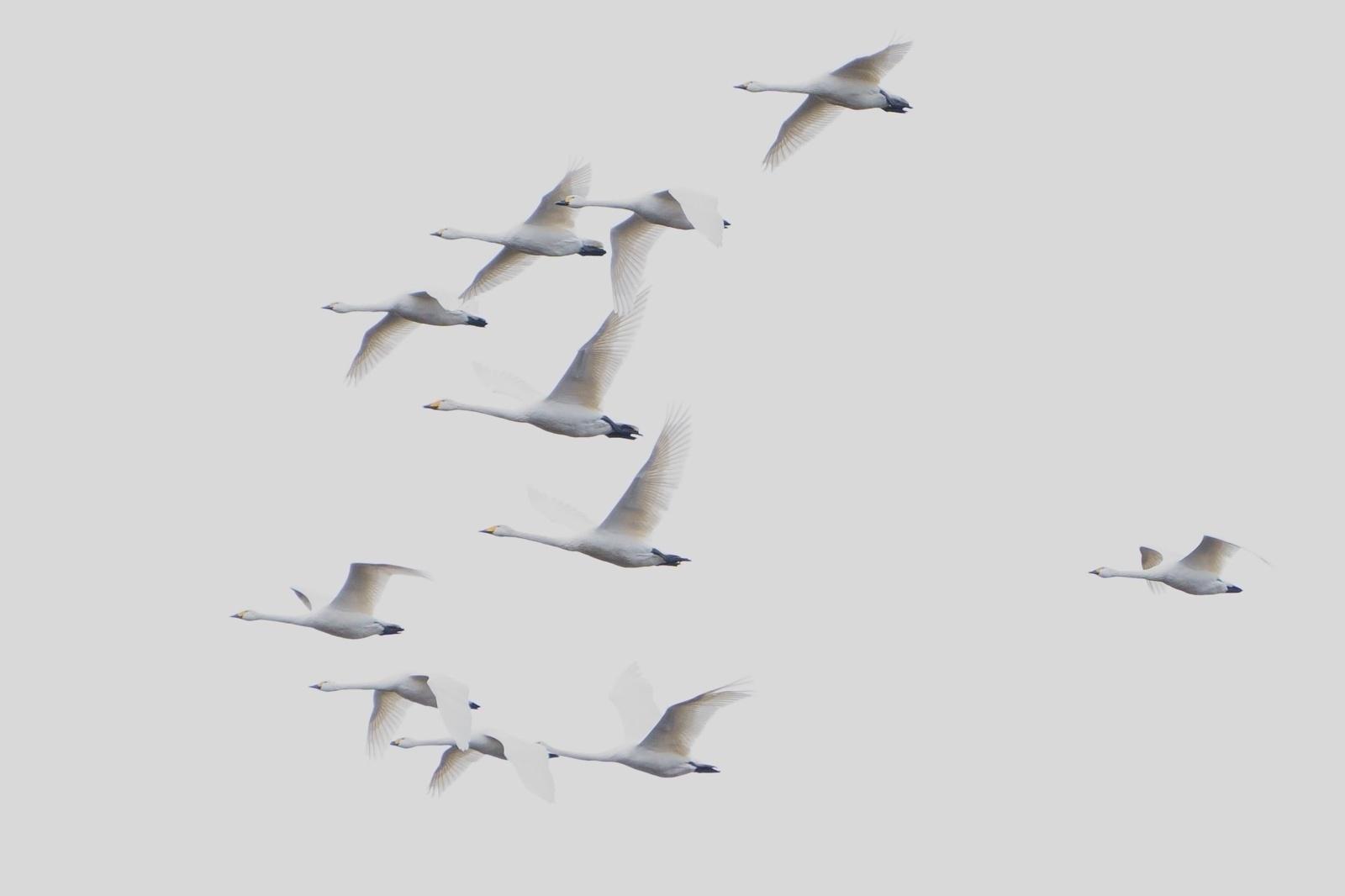 Kuršių nerijoje užfiksuoti grįžtantys paukščiai (nuotraukų galerija)