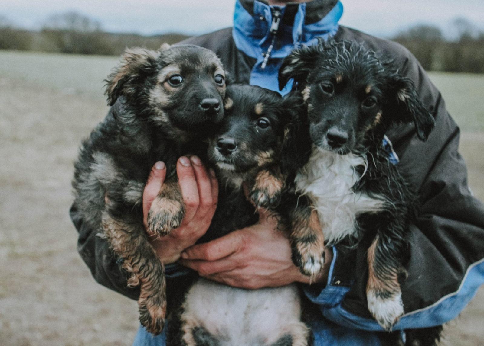 Neatsakingo kalyčių laikymo pasekmė – bešeimininkiai šuniukai