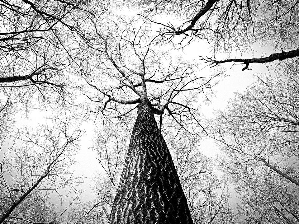 Paukščiams apsaugoti apribotas medžių kirtimo ir genėjimo laikas