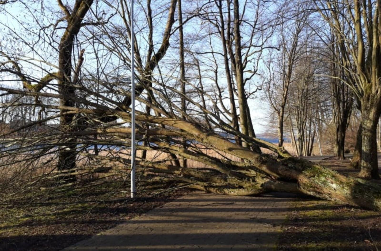 Audra Lazdijų rajone vartė medžius, laužė šakas