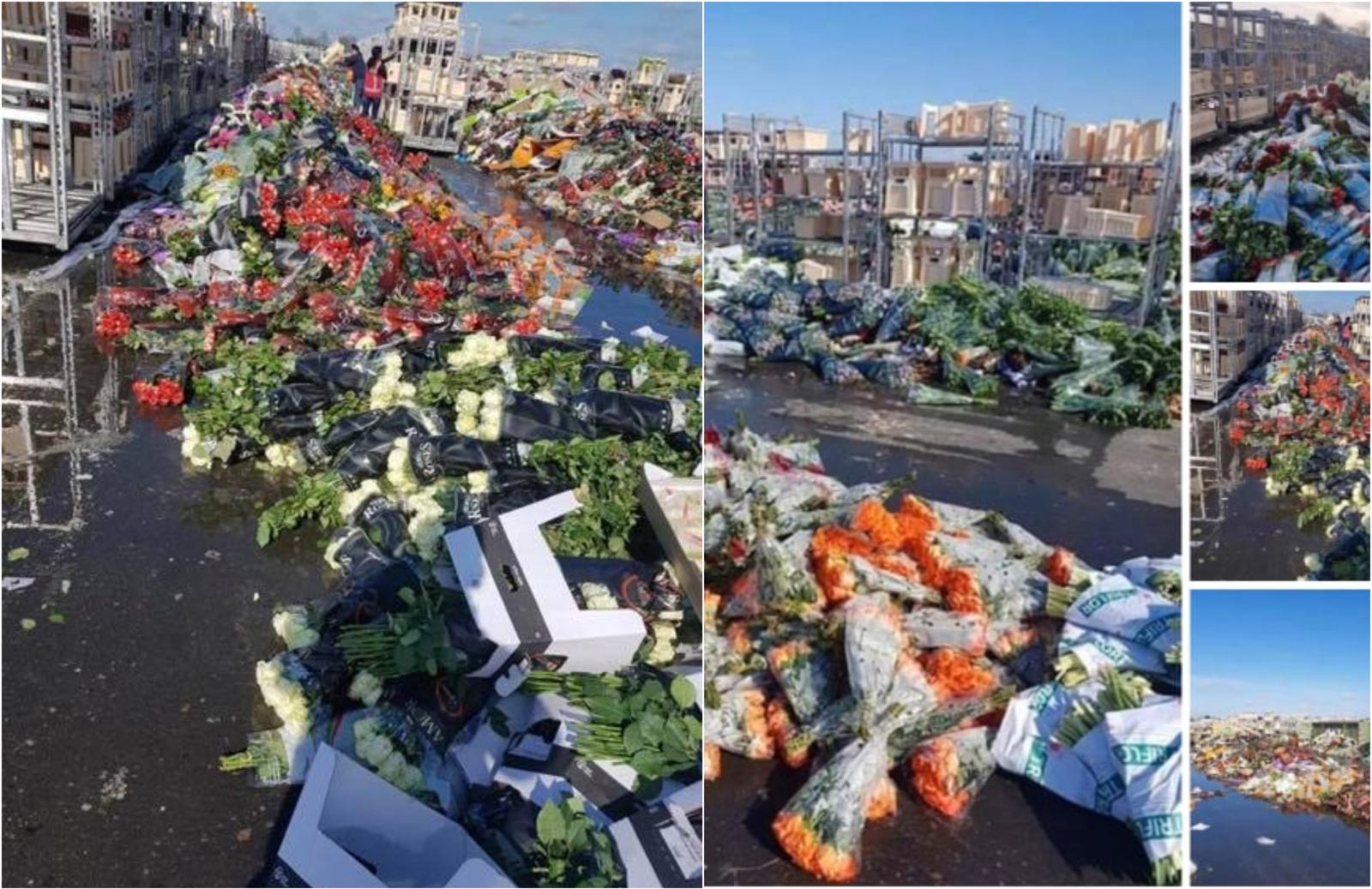 Olandijoje dėl koronaviruso kritus paklausai masiškai naikinamos gėlės
