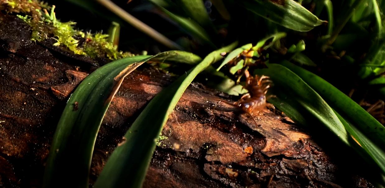 Kaip atrodo boružėlės namai po žolės deginimo (VIDEO)