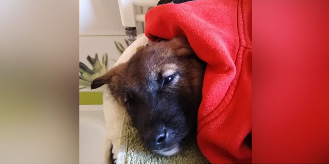 Kėdainių rajone geradarys išgelbėjo leisgyvį šuniuką