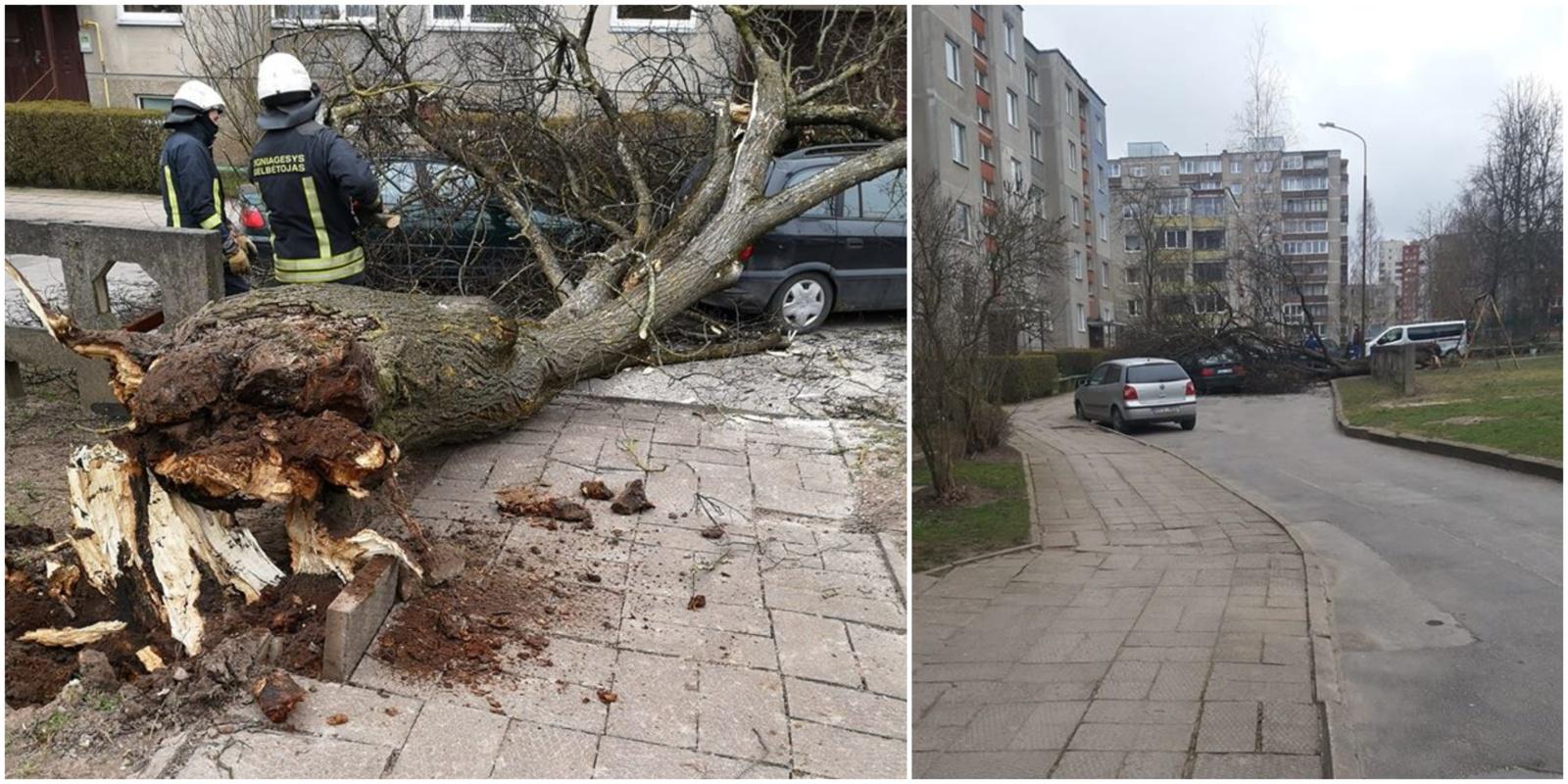 Vėjo gūsiai Šiauliuose pridarė žalos