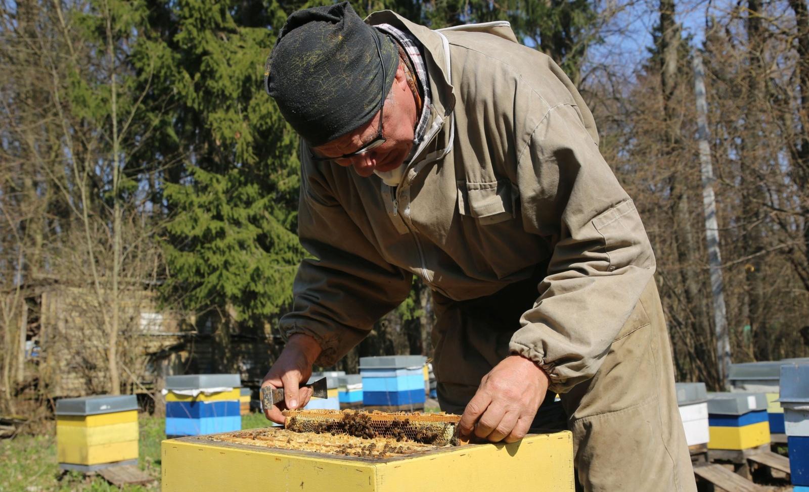Amšiejaus bitės jau neša velykinį medų