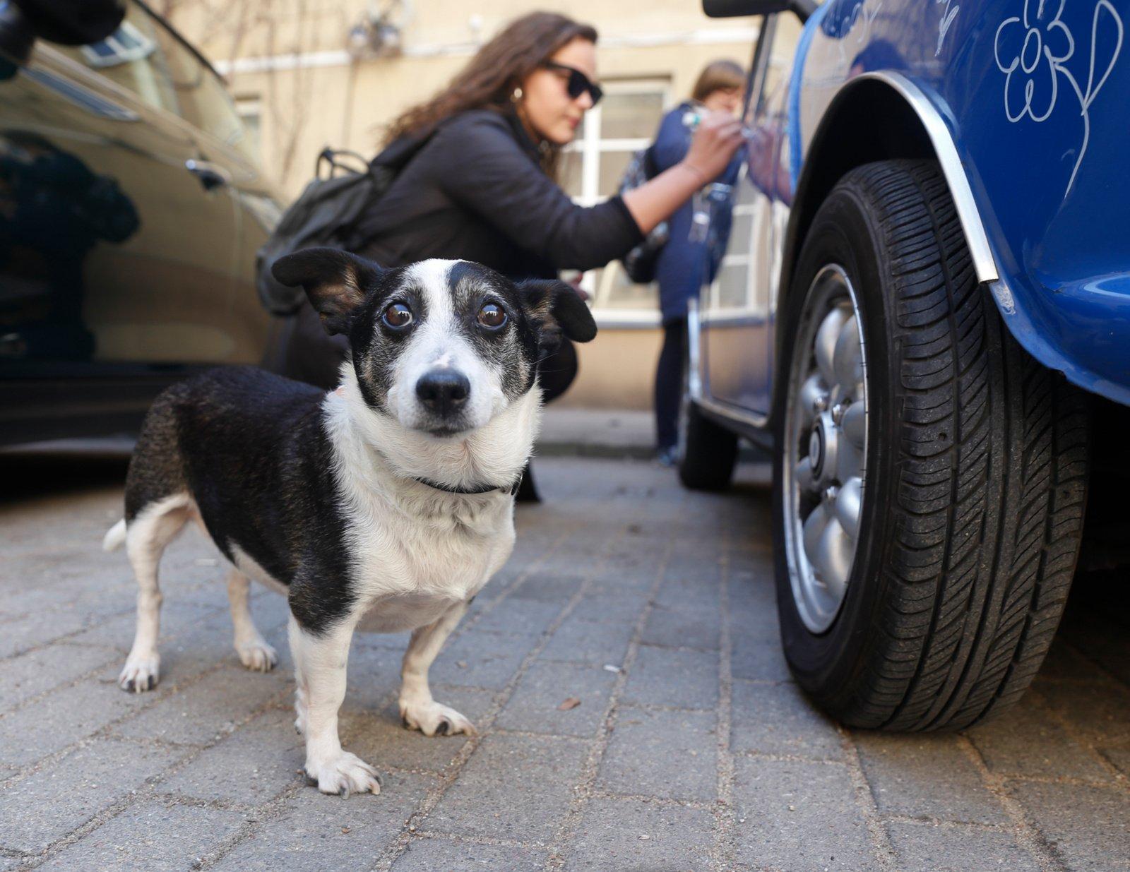 Siūloma įpareigoti veisėjus privalomai ženklinti gyvūnus