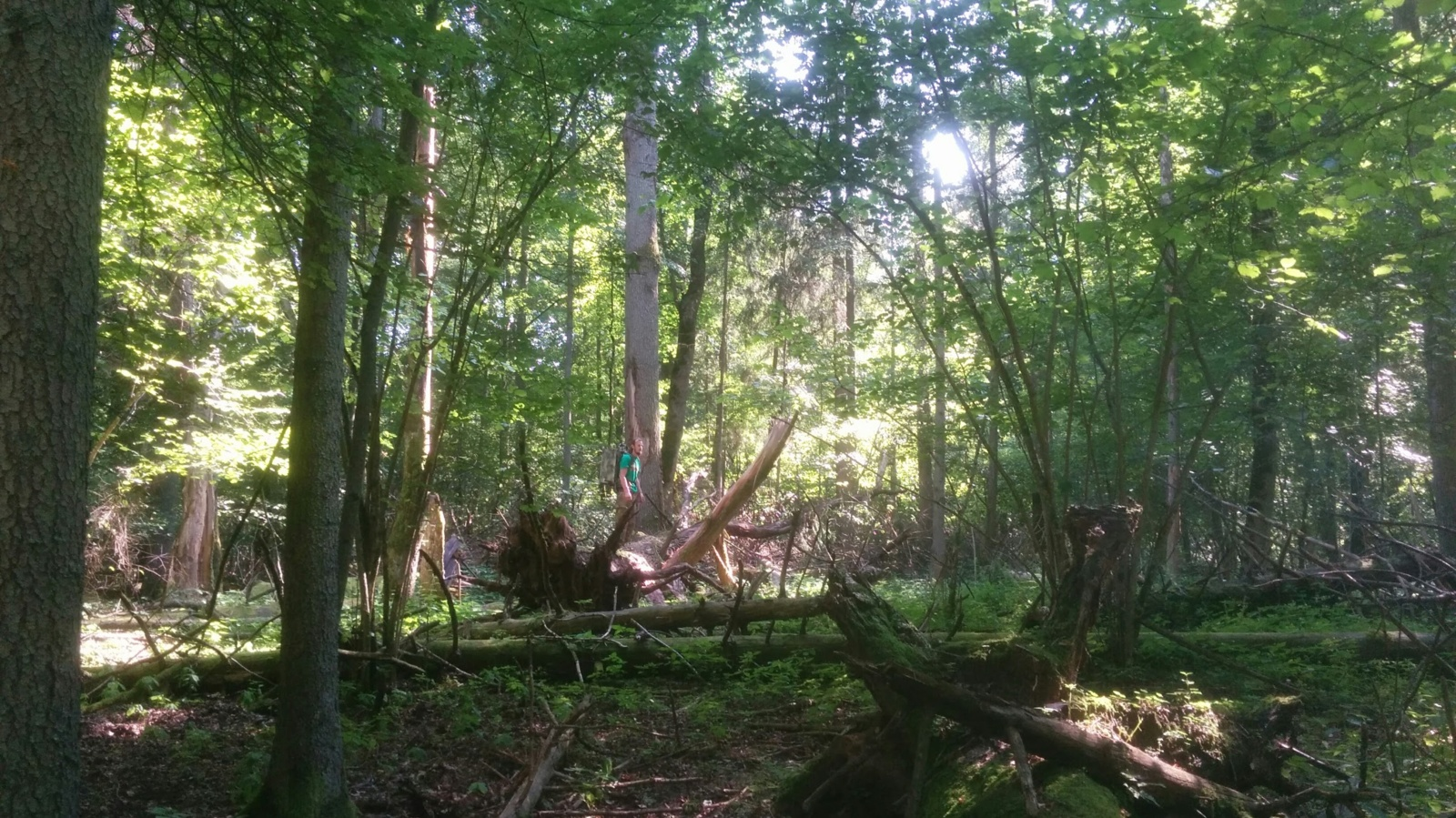 Sengirės fondas užsibrėžė ambicingus tikslus: įsigys miškų plotus, kuriuos saugos nuo kirtimų