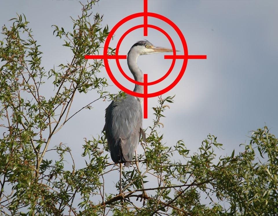 """Ornitologai sunerimę: siekiama """"prastumti"""" leidimą medžioti visus vandens paukščius?"""