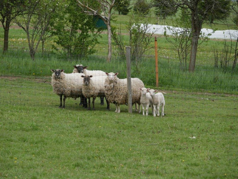 """""""Baltijos vilko"""" nariai aplankė vilko užpultą ūkininką"""