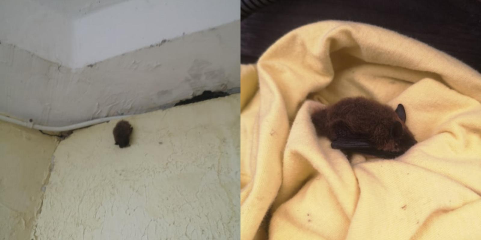 Daugiabučio gyventojai sunerimo dėl šikšnosparnio: baiminosi, kad šis gali nešioti koronavirusą
