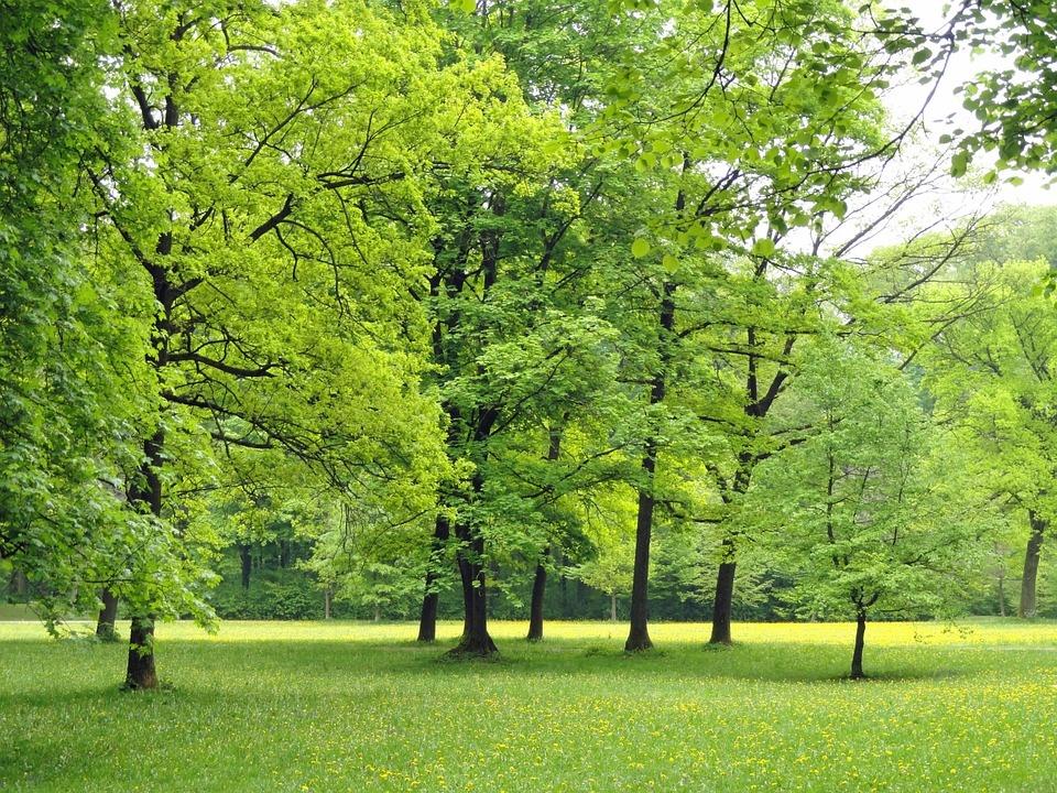 Trakų rajono savivaldybė kviečia sodinti medžius