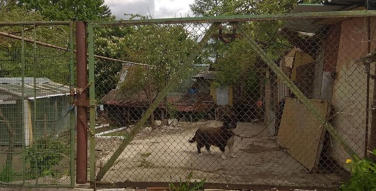 Justinavoje – smurto protrūkis prieš gyvūną: moteris šunį lupo be gailesčio