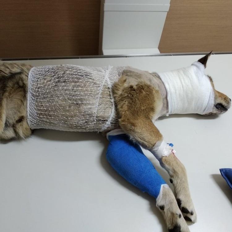 Žiauriai sužaloto šunelio Rudžio istorija šokiravo net visko mačiusius gyvūnų globėjus