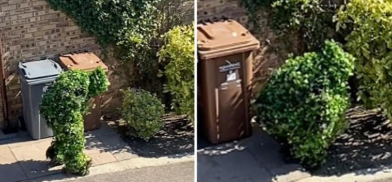 Vyras karantino metu iš namų išėjo persirengęs... krūmu (vaizdo įrašas)
