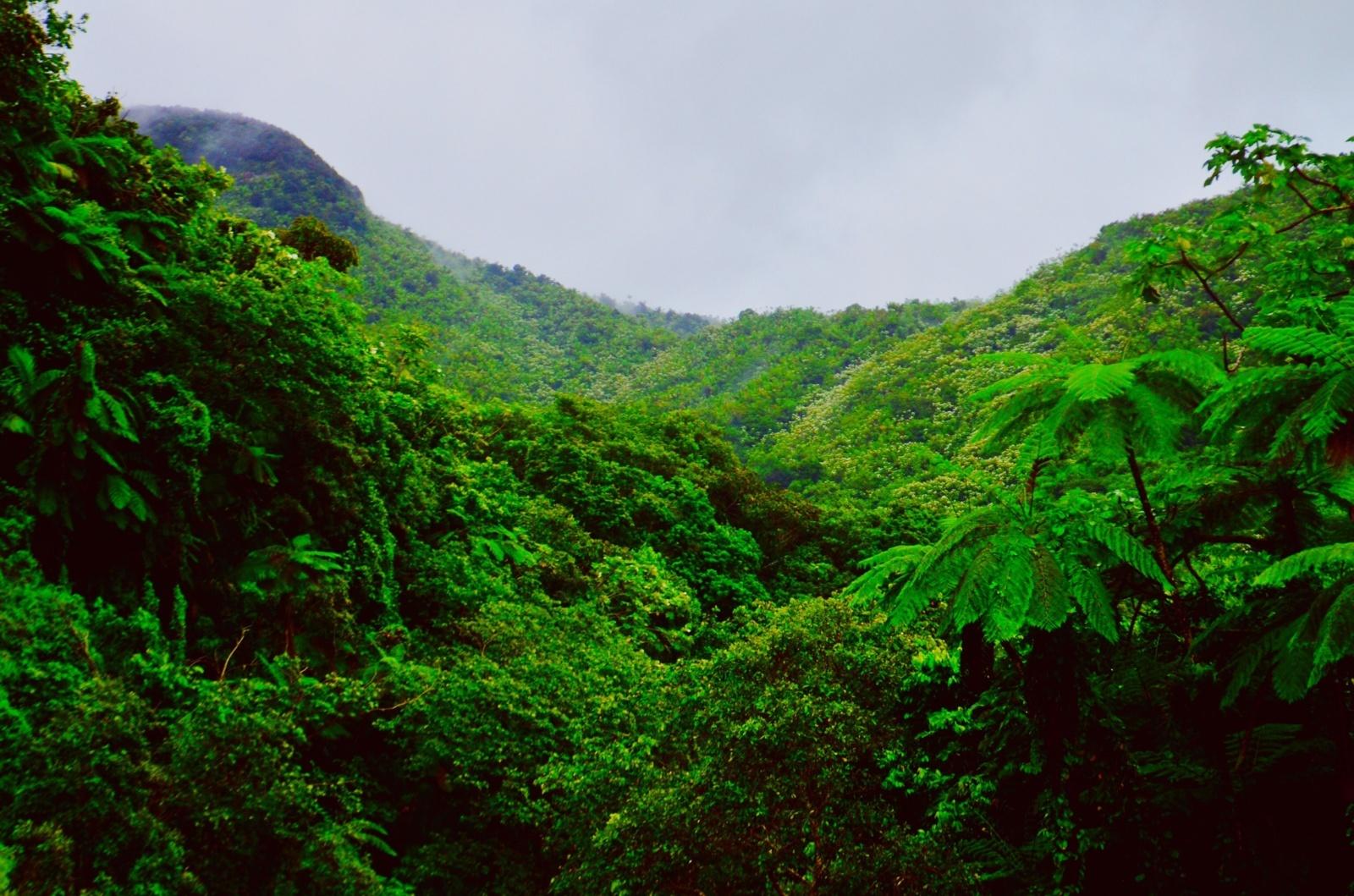 Amazonės miškų kirtimai pasiekė aukščiausią lygį per 5 metus