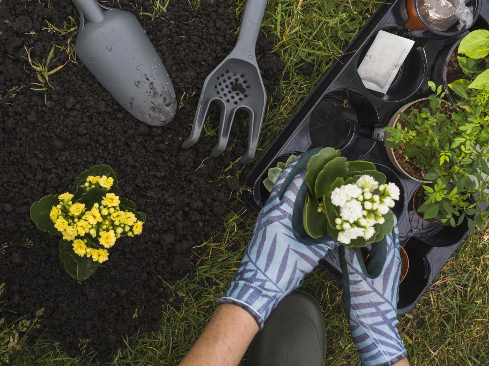 Trys pavojai,  tykantys neatsargių sodininkų