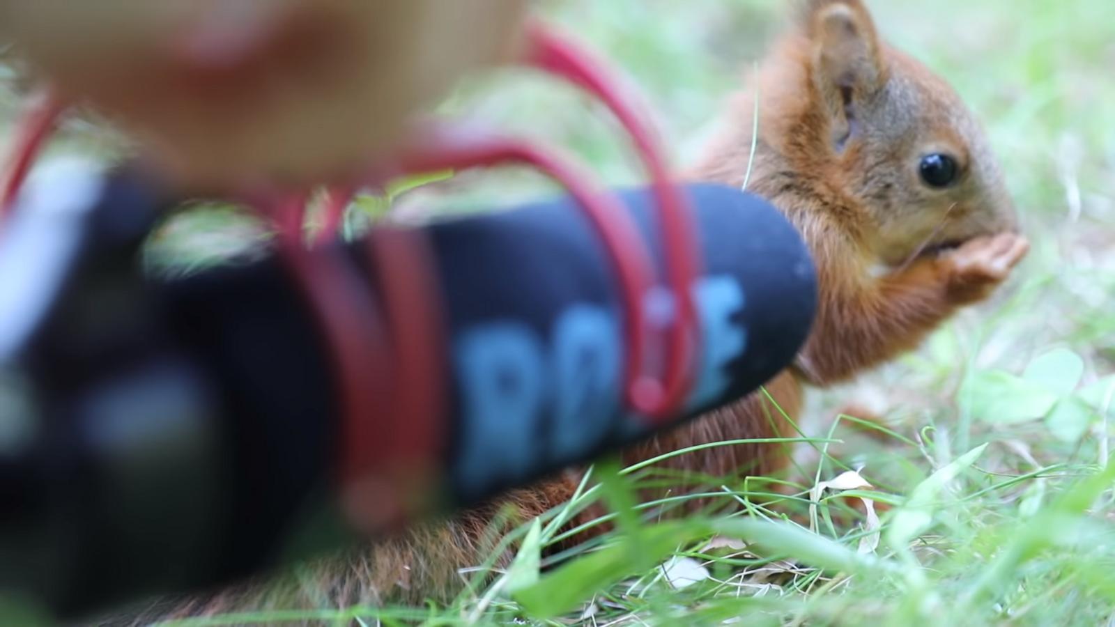 Nufilmuotas valgantis voveriukas ištirpdė visų internautų širdis (vaizdo įrašas)